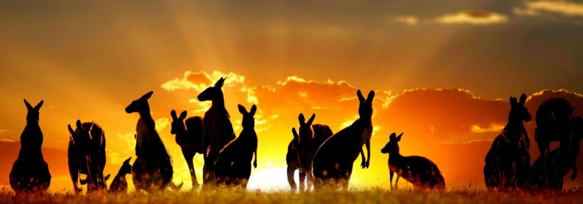 kangaroo Education Foundation Blog
